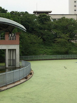 Co1ysezukaavf4h
